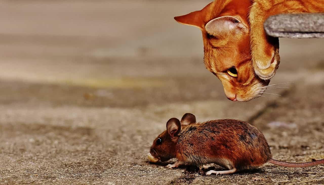 analogies on the wonderlic test - cat&mouse
